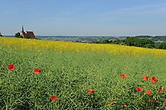 Höhe Hohenfeld_5