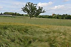 Hohenfelder Höhe_16